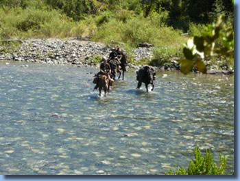 Riders crossing a river on a horseback trail ride in NP Huequehue, Chile