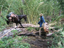 Steven leading his horse through thick bamboo on a 5 day trail ride in NP huerquehue, Chile.
